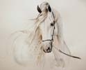 Horse Painting - Horse Painting Manufacturer, Wholesale Horse Painting