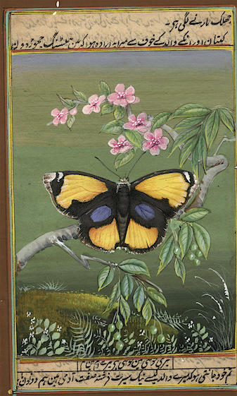 Butterfly - Paper Paintings